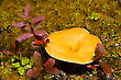 Mushroom & Friends 2723-07